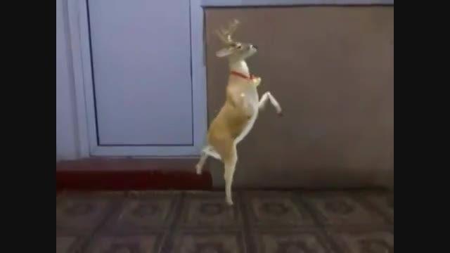 رقص گوزن
