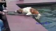 نجات سگها در روسیه