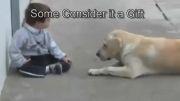 حالا حالاها مونده تا انسان سگ را بشناسد