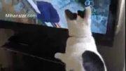 علاقه عجیب یک گربه به دیدن یک برنامه تلویزیونی