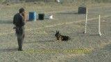 آموزش تخصصی سگ نگهبان
