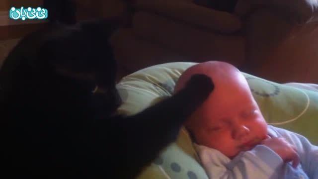 گربه ای که بچه را آرام می کند
