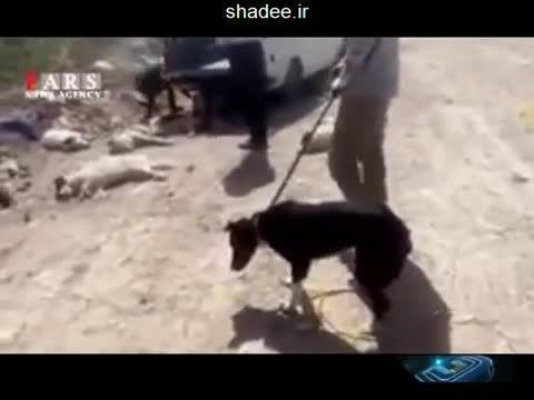 سگ کشی بی نظیر در ایران و عاشق شدن مرغ ها