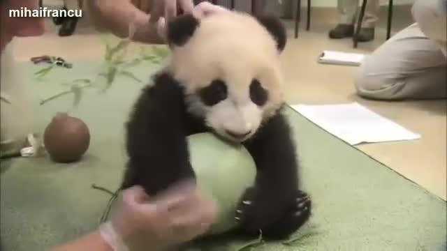مجموعه لحظات جالب و خنده دار از بچه های بامزه ی حیوانات