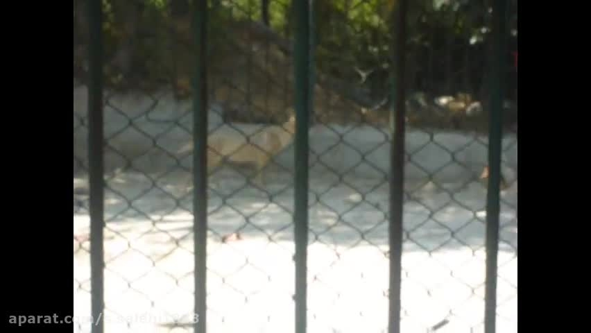 گرگ پارک پردیسان