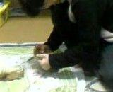 در دانشگاه ارومیه نارگیل(فرهاد)، نارگیل را پوست می کند!