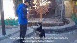 مسابقه داخلی باشگاه مدرسه سگ ها، فینالیست 7