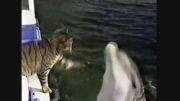 دوستی شگفت انگیز گربه و دلفین