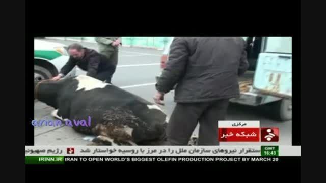 سرقت گاو در خارج نه... در ایران !!!!!!