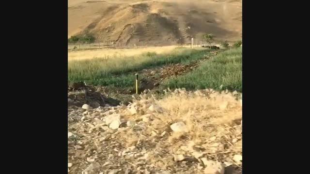 ویدئوی سلفی سیما خضر آبادی