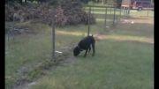 اونجای سگو برق میگیره :))
