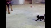 بچه گربه سگ را کلافه کرد
