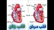فرق قلب مردان با زنان(تا اخر ویدیو نگاه كن)