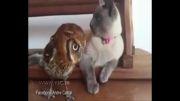 جلب توجه گربه و بی اعتنایی جغد