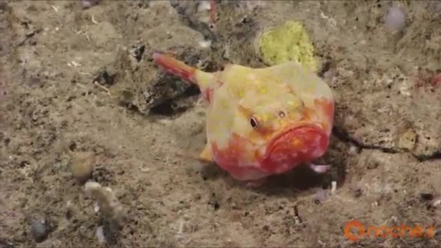 کشف موجودات ناشناخته ی جدید در اعماق اقیانوس