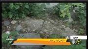 درختی عجیب از دل سنگ در ایران- Strange tree in stone