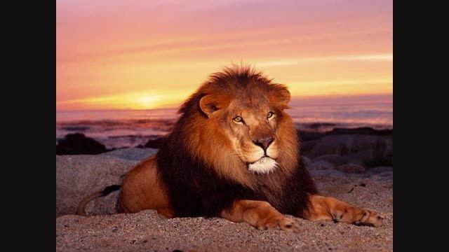 کدام یک از این حیوانات خطرناک تر و قوی تر هستند؟