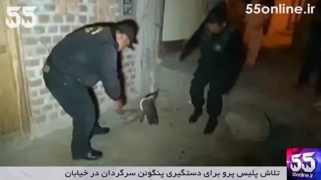 تلاش پلیس پرو برای دستگیری پنگوئن سرگردان