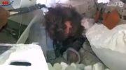 لحظه دستگیری یکی از سرکردگان داعش در شمال عراق