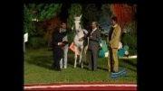 اسب سمنگان (ملکه زیبایی)