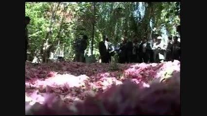 جشنواره گل میمند فارس - شرکت کشت و صنعت گل قطره فارس