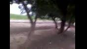 جونور عجیب درختی
