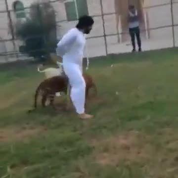بازی  عربا با حیوانات وحشی خانگی