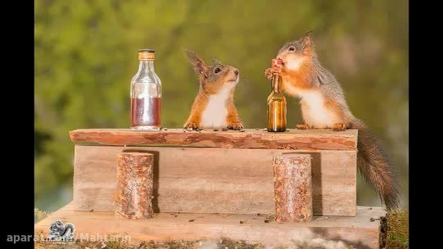سنجاب های حیات خلوت من - ماه ترین