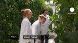 روش نوین تولید گوجه فرنگی