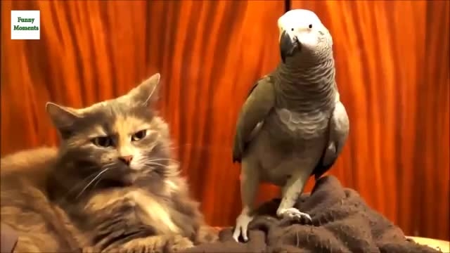 نمونه هایی از آزار حیوانات خانگی توسط طوطی سانان!