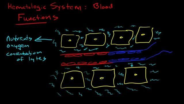آشنایی با سیستم خون سازی