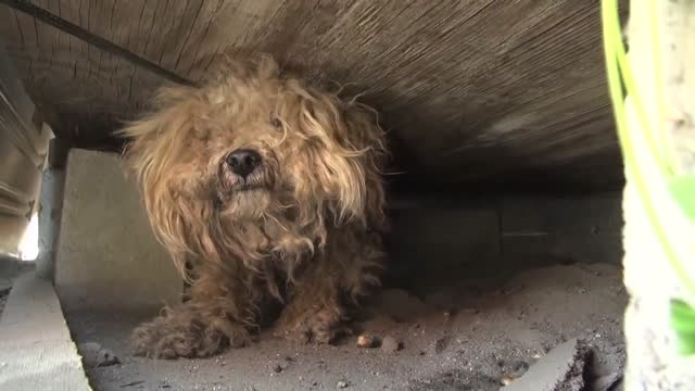 نجات سگ وفادار بعد از مرگ صاحبش...!! HD
