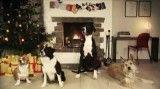 شادی سگها در کریسمس