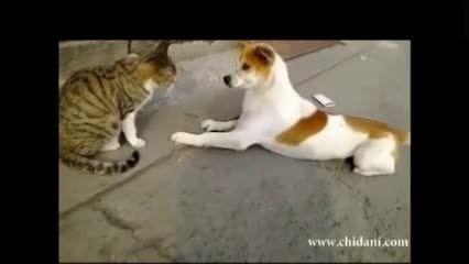 سماجت سگ برای تصاحب غذای گربه