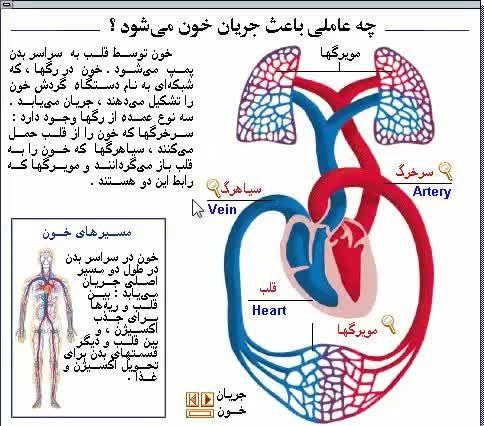 چه چیزی باعث جریان خون می شود؟