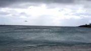 هواپیما . فرود هواپیما در 1 متری ماشین ها