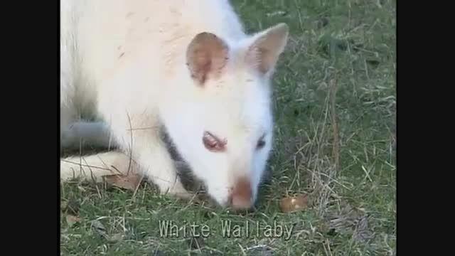 حیواناتی که سفیدشان را ندیده اید