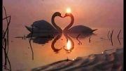 دلم به تو شده وابسته....