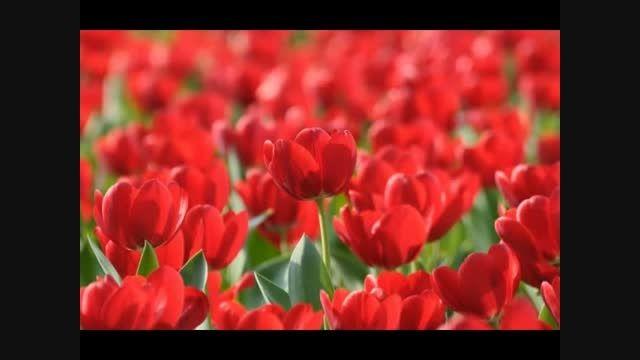 غزل 395- گلبرگ را ز سنبل مشکین نقاب کن