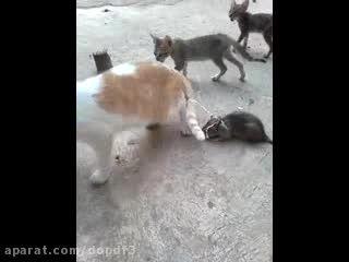 گربه مرد از ترس!!