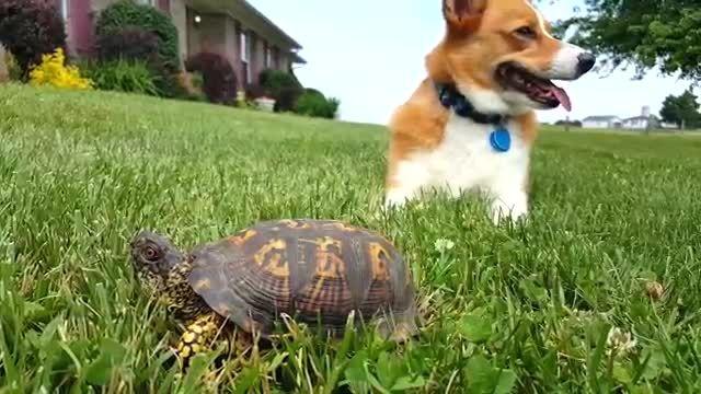 عکس العمل سگ به حرکت لاکپشت