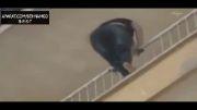 خودکشی غم انگیز دختر جوان!!