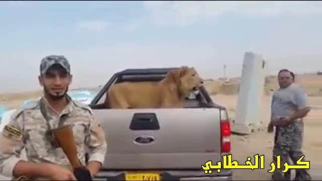 نیروهای جیش المهدی وگرفتن شیر نر در نینوای عراق