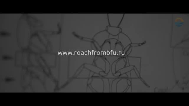 سوسک جاسوس : «سایبورگ» رباتی در ابعاد یک حشره