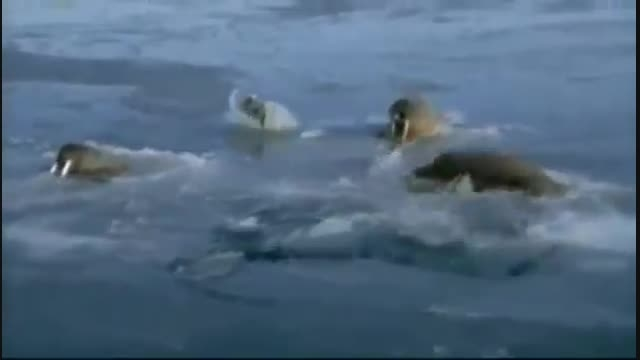 National Geographic   مستند زندگی در قطب