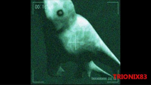عکس هایی از مخلوق انسان گونه ی قطب جنوب (نینجن)