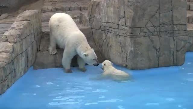 بازی توله خرس با مادرش