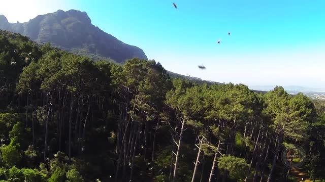 حمله گروهی زنبورها به یک پهپاد سبک!