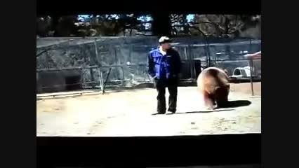 حمله مرگبار خرس به انسان!!