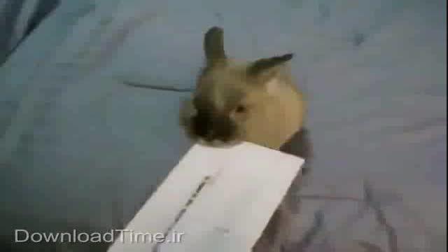 شیوه نوین باز کردن پاکت نامه